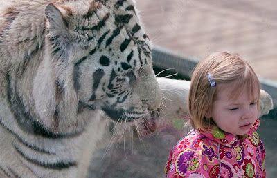 imaganes curiosas tigre y niña