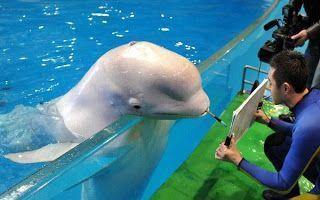 delfin-pintor1