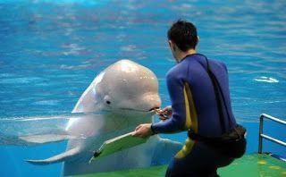 delfin-pintor4