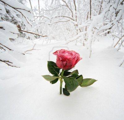 fondo de nieve.