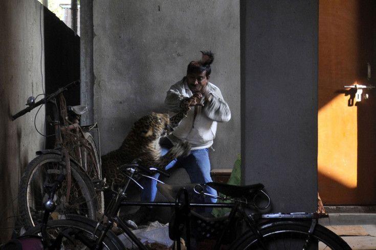 Mejores Fotos 2012 – ataque de un leopardo