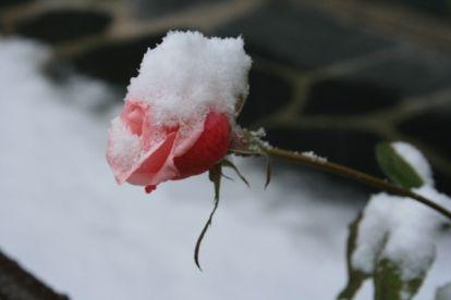 fondos-de-nieve-en-las-fotos
