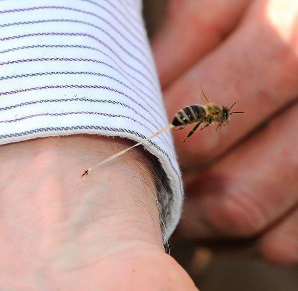 abeja-pica-alguien-muere