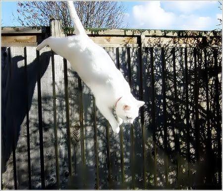 """iso-8859-15""""Porqué los gatos tienen siete vidas CURIOSIDADESCURIOSAS"""