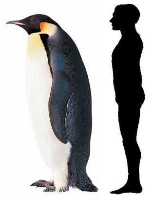pinguinos_gigantes