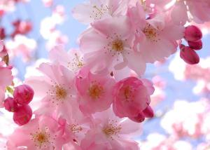 La Primavera 2013 sigue sin Llegar