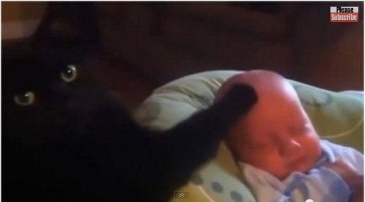 Un Gato Calma a un Bebé en Llanto