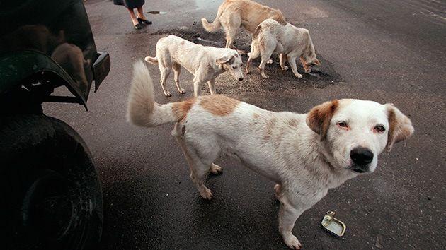 Perros callejeros salvan a una niña de agresión
