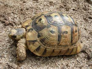 La mascota más vieja del mundo