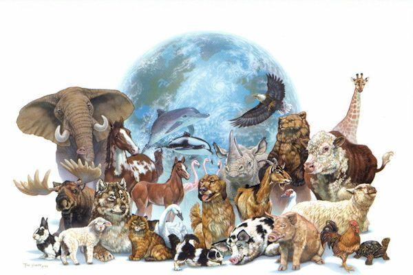 Curiosidades Muy Curiosas Sobre El Reino Animal