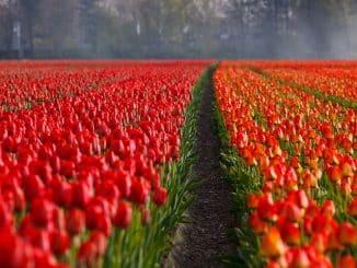 5 Beneficios Saludables de Cuidar el Jardín
