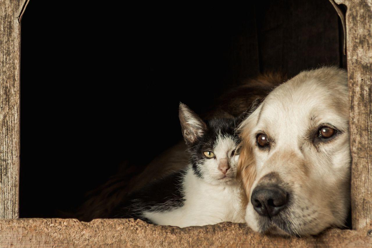 Desparasitar a nuestras mascotas
